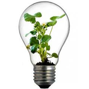 Lightbulb with Growth